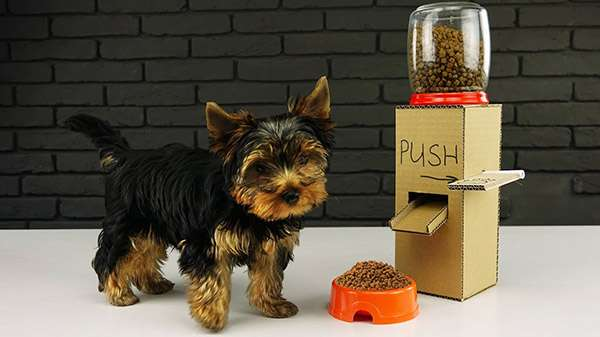 How to Make Dog Food Dispenser from Cardboard at Home